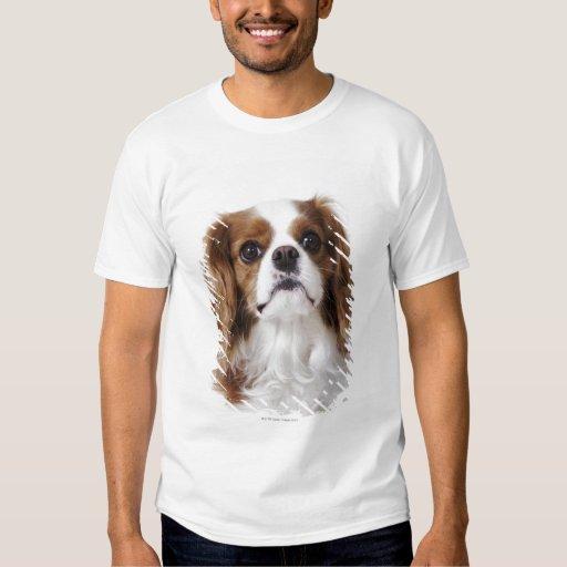 Perro de aguas de rey Charles arrogante que se Camisas