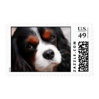 perro de aguas de rey Charles arrogante Timbre Postal