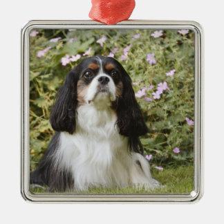 Perro de aguas de rey Charles arrogante tricolor Adorno Navideño Cuadrado De Metal