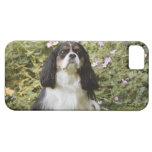 Perro de aguas de rey Charles arrogante tricolor Funda Para iPhone SE/5/5s