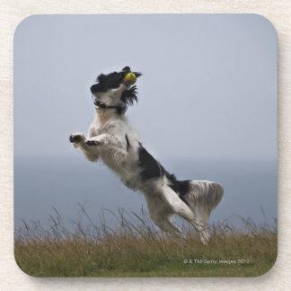 perro de aguas de saltador blanco y negro que posavaso