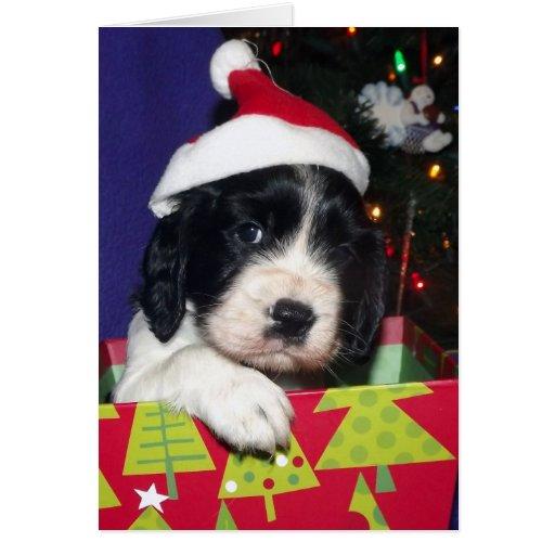 Perro de aguas de saltador inglés blanco y negro C Tarjeton