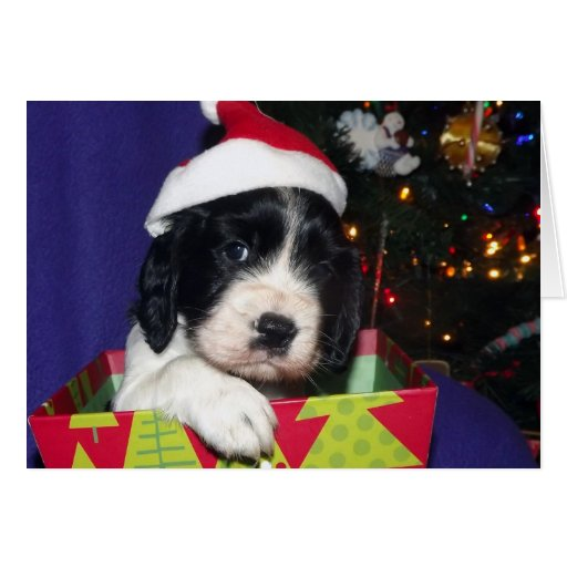 Perro de aguas de saltador inglés blanco y negro C Tarjeta