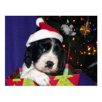 Perro de aguas de saltador inglés blanco y negro tarjeta postal