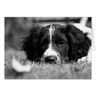 Perro de aguas de saltador inglés tarjeta de felicitación