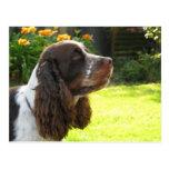 Perro de aguas de saltador inglés tarjetas postales