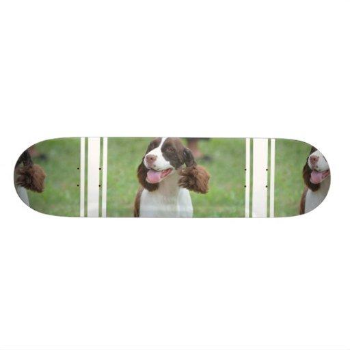 Perro de aguas de saltador lindo patin