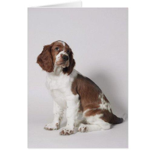 Perro de aguas de saltador tarjeta de felicitación