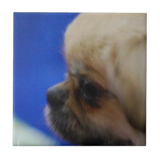 Perro de aguas tibetano lindo azulejo cuadrado pequeño