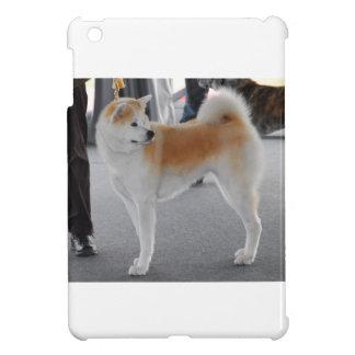 Perro de Akita Inu en una exposición canina