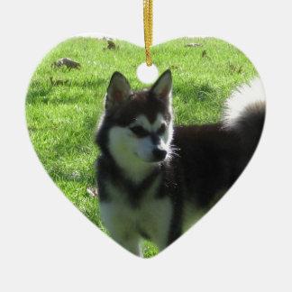 Perro de Alaska de Klee Kai Adorno Navideño De Cerámica En Forma De Corazón