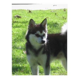Perro de Alaska de Klee Kai Membrete A Diseño