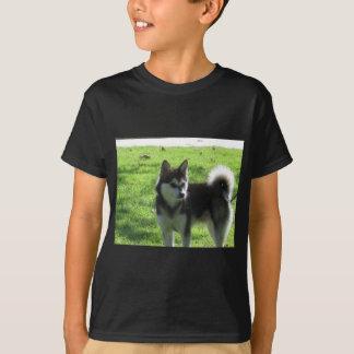 Perro de Alaska de Klee Kai Playera