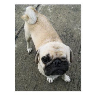 Perro de Bauwk… Soi Tailandia