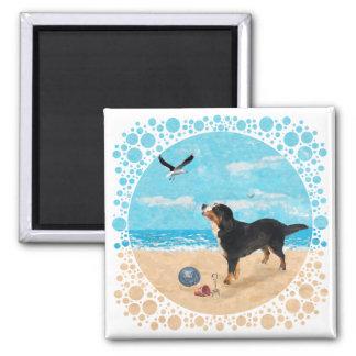 Perro de Bernese Mt en la playa Imán Para Frigorifico