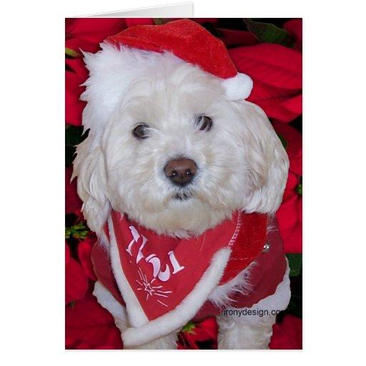 Perro de Bichon Frise del navidad Felicitaciones
