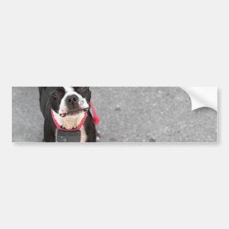 Perro de Boston Terrier Pegatina De Parachoque