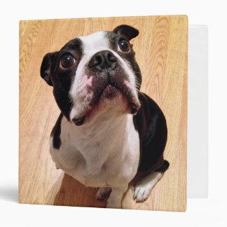 """Perro de Boston Terrier Carpeta 1 1/2"""""""