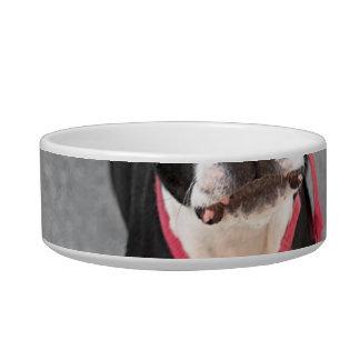 Perro de Boston Terrier Comedero Para Mascota