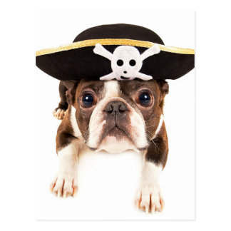 Perro de Boston Terrier vestido como pirata Postal