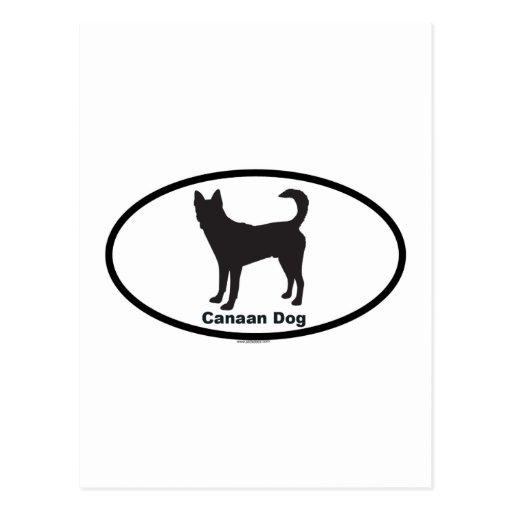 Perro de Canaan Postal