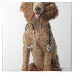 Perro de caniche de oro que lleva un estetoscopio azulejo cuadrado grande