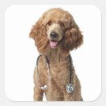 Perro de caniche de oro que lleva un estetoscopio calcomanías cuadradas personalizadas