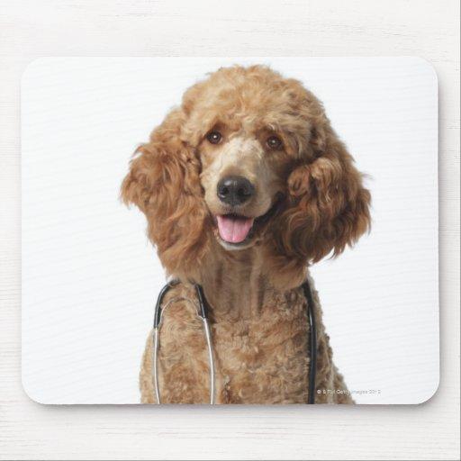 Perro de caniche de oro que lleva un estetoscopio tapete de raton