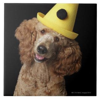 Perro de caniche de oro que lleva un gorra azulejo cuadrado grande