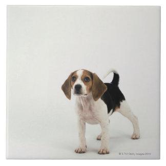 Perro de caza azulejo cuadrado grande