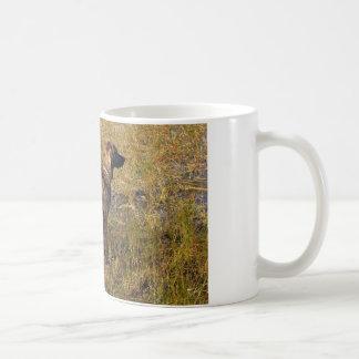 Perro de caza de Plott de la caza en taza de café