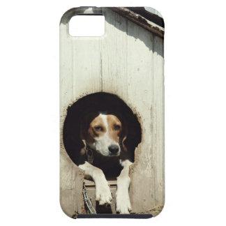 Perro de caza en casa de perro iPhone 5 cobertura