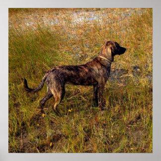 Perro de caza en poster de los humedales