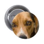 Perro de caza leal del perro del beagle pins