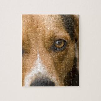 Perro de caza leal del perro del beagle puzzle