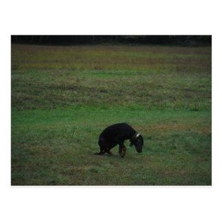 Perro de caza que da para arriba la caza postal
