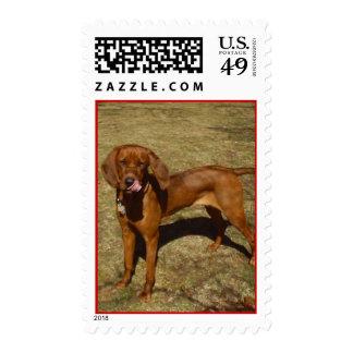 Perro de caza sello