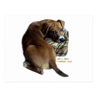 Perro de caza triste postal