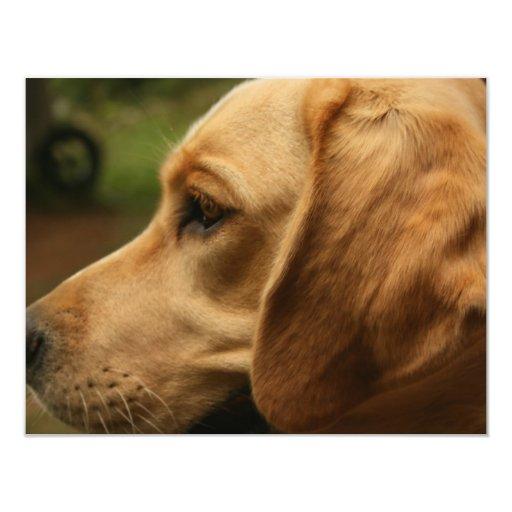 Perro de chiles invitación 10,8 x 13,9 cm