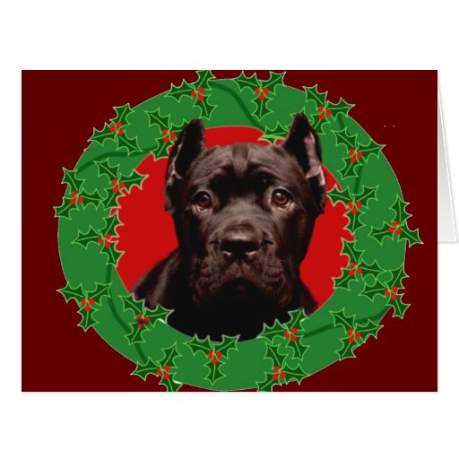 Perro de Corso del bastón del navidad Tarjetas