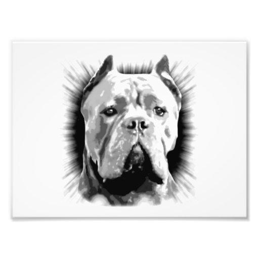 Perro de Corso del bastón Fotografía