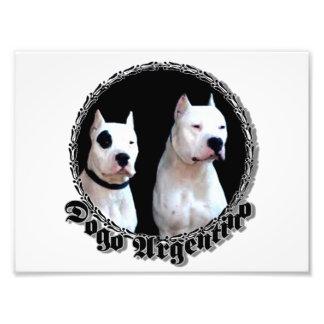 Perro de Dogo Argentino Fotografías