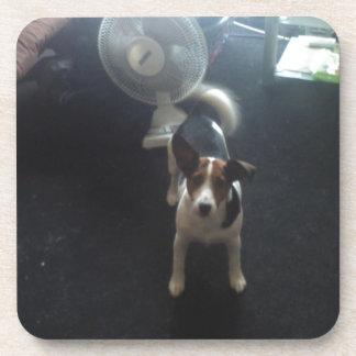 Perro de Jack Russell Posavasos De Bebidas