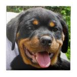 Perro de la cara del perrito de Rottweiler lindo Tejas Ceramicas