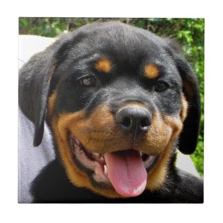 Perro de la cara del perrito de Rottweiler lindo Azulejo Cuadrado Pequeño