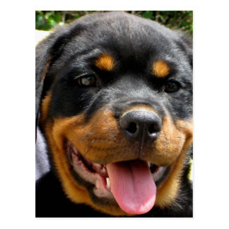 Perro de la cara del perrito de Rottweiler lindo Tarjetas Postales