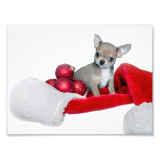 Perro de la chihuahua del navidad impresion fotografica
