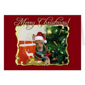 Perro de la chihuahua del navidad tarjeta de felicitación