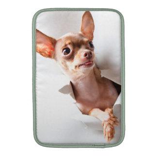 Perro de la chihuahua que rasga a través fundas para macbook air