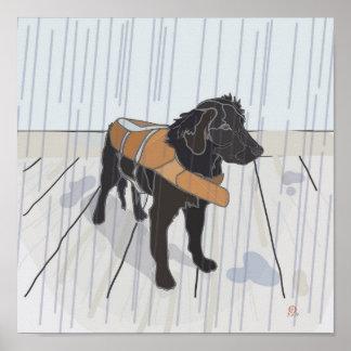 Perro de la lluvia poster